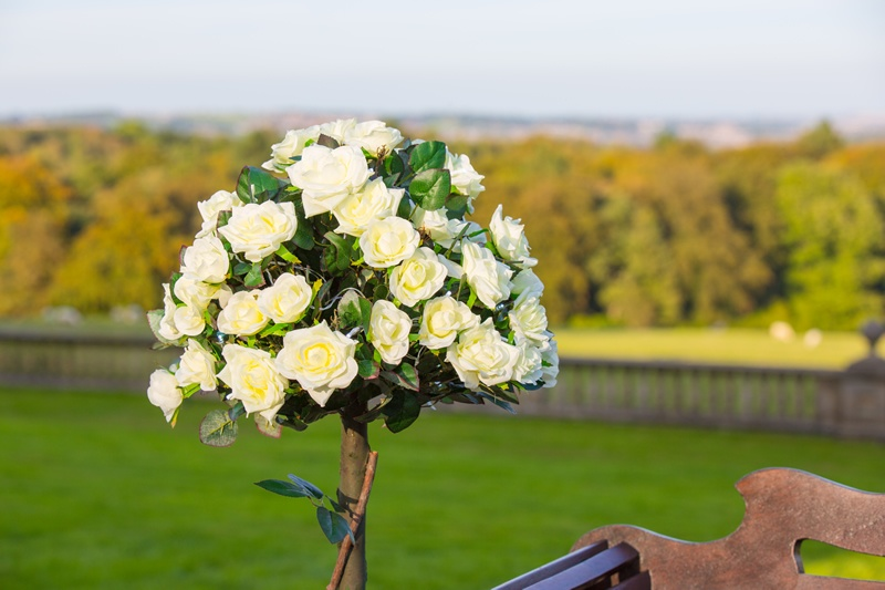 Cream Roses Bay Trees - Wedding Venue Styling- Sophia's Final Touch